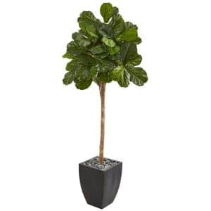71 in. Fiddle Leaf Fig Artificial Tree in Black Planter