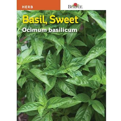 Basil Sweet Seed