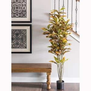 6 in. Potted Cronton Tree with 140-Leave Green and Orange