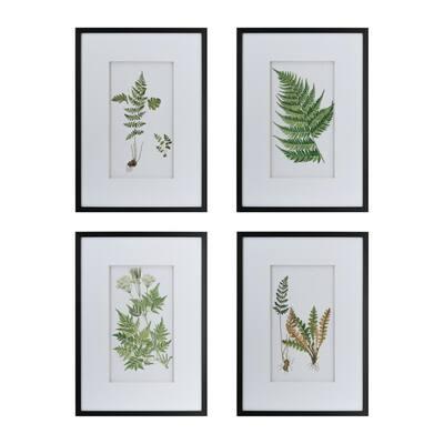 Botanical Fern White Framed Wall Art (Set of 4)