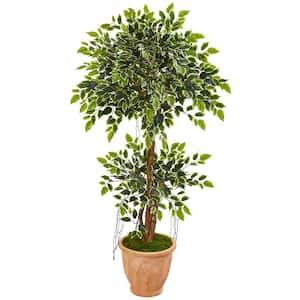 Indoor 53 in. Variegated Ficus Artificial Tree in Terra Cotta Planter