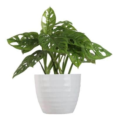 Planter House Plants Indoor Plants The Home Depot
