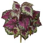 16 in. Wax Begonia Bush (Set of 6)