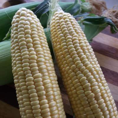 Corn Golden Bantam