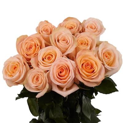 1-Dozen Peach Roses- Fresh Flower Delivery