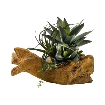 Indoor Agave Plant with Mixed Succulents on Drift Wood