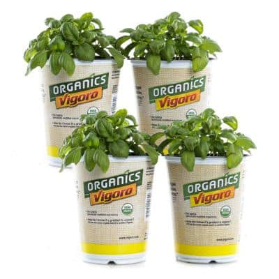 1.71-Pint Vigoro Organic Sweet Genovese Basil Plants (4-Pack)