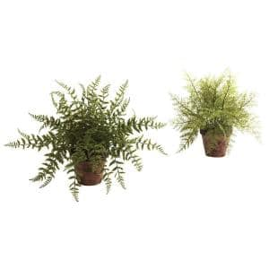 Fern with Decorative Planter (Set of 2)