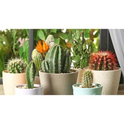 11 Oz. Cactus Plant Mix in 3.5 In Grower's Pot (3-Plants)