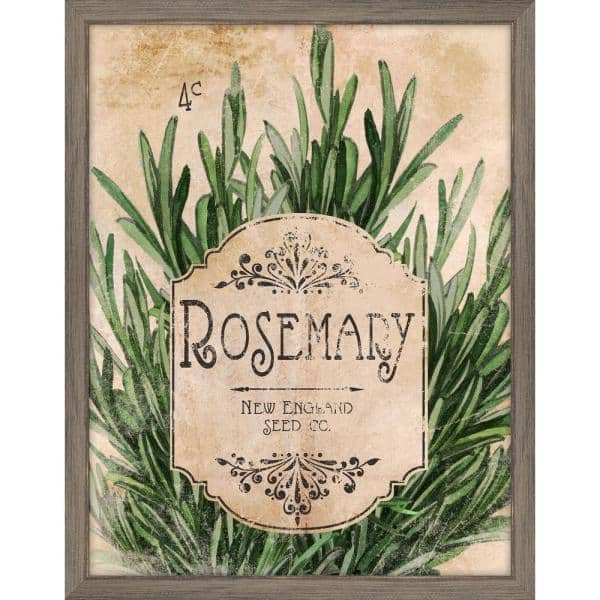 Melissa Van Hise Seed Packet Rosemary Framed Giclee Vintage Art Print 15 In X 19 In Ip11355 The Home Depot