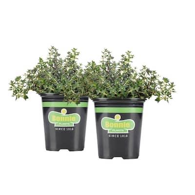 19.3 oz. German Thyme Plant 2-Pack