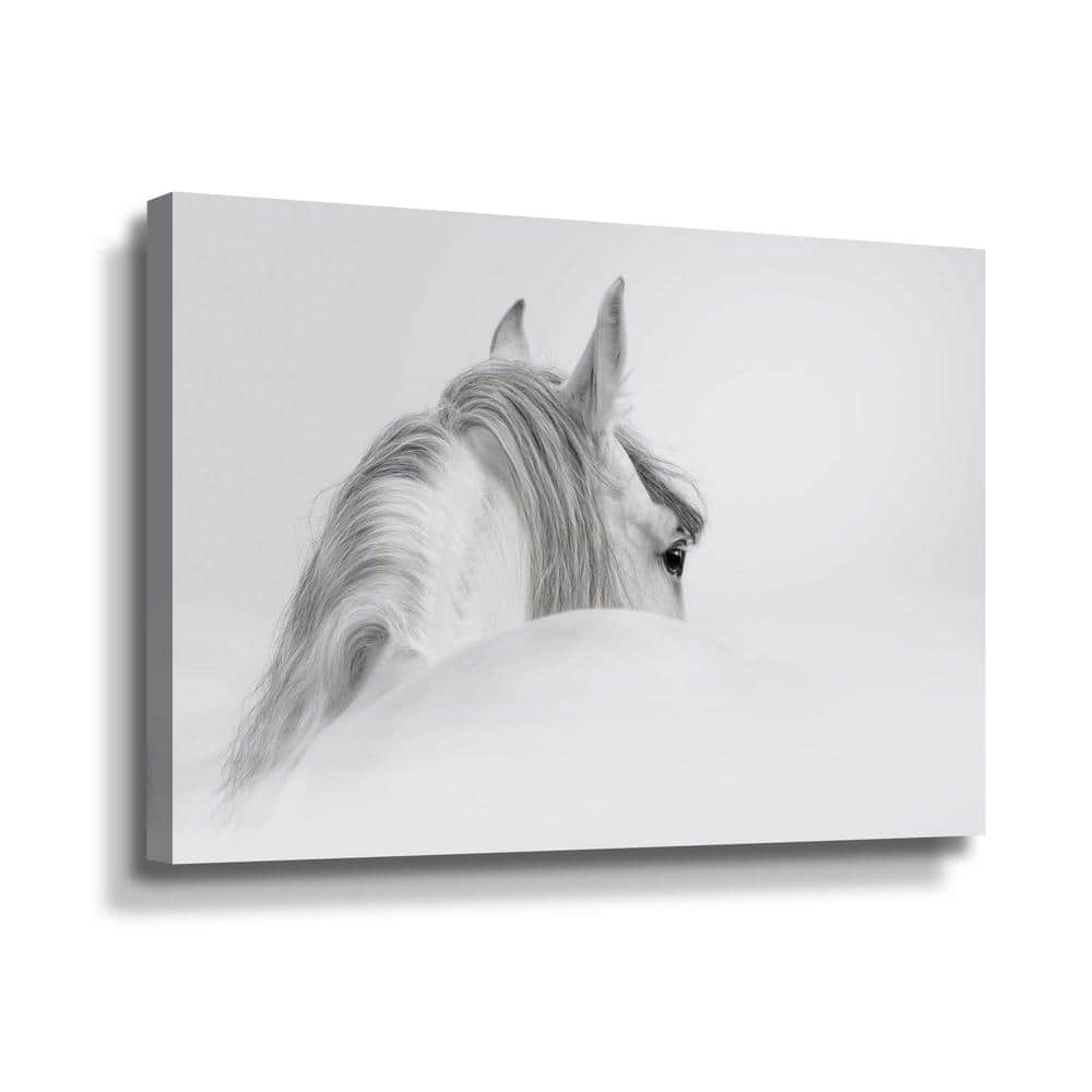 Artwall White Horse By Photoinc Studio Canvas Wall Art 5pst188a2436w The Home Depot