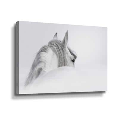 White horse' by PhotoINC Studio Canvas Wall Art
