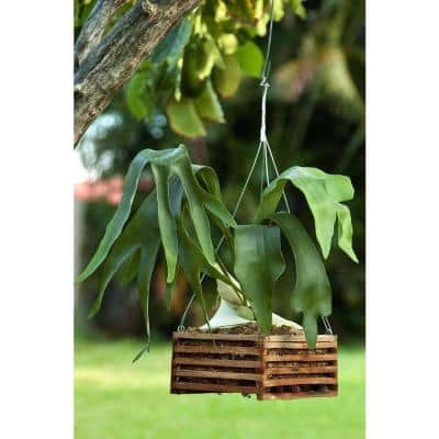 4 in. Wooden Square Basket with Hanger (2-Pack)
