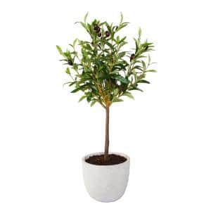 28 in. Faux Olive Tree in 7.25 in. Gray Cement Pot