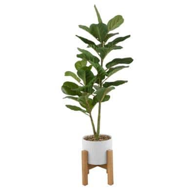 46 in. H Artificial Fiddle-Leaf in 8 in. Roman Cement Pot on Wood Stand