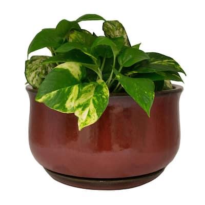 14 in. Dia Oxblood Red Bella Ceramic Bowl Planter