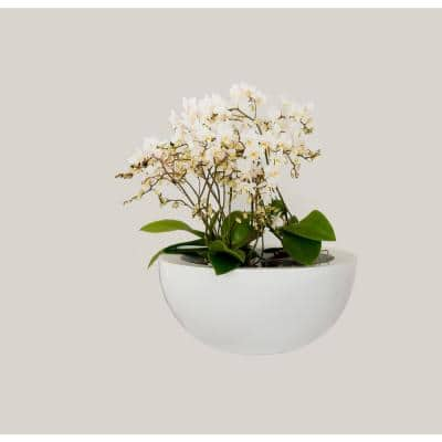 7 in. Tall Small Glossy White Fiberstone Vic Bowl Indoor Outdoor Modern Round Planter