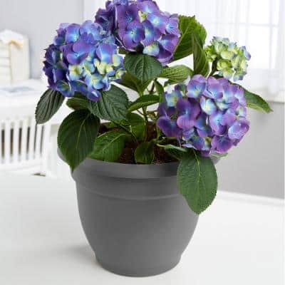 Ariana 13 in. Charcoal Grey Plastic Self-Watering Planter