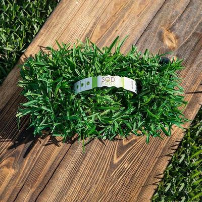 St Augustine Floratam Grass Plugs (16-Count) Natural, Affordable Lawn Improvement