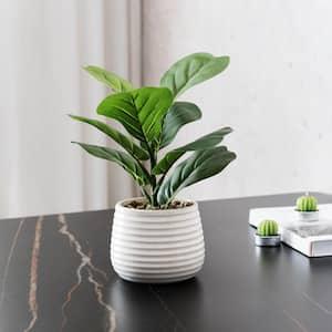 Fiddle Leaf Fig in Ceramic Pot