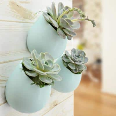 Round 3-1/2 in. x 4 in. Mint Ceramic Wall Planter (3-Piece)