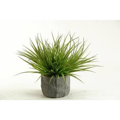 Indoor Wild Grass in Concrete Bowl