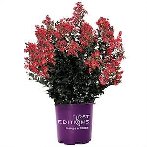 7 Gal. Midnight Magic Crape Myrtle Tree with Dark Pink Flowers