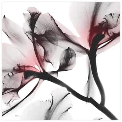 """""""Coral Luster-2"""" Unframed Free Floating Tempered Glass Panel Graphic Wall Art Print 24 in. x 24 in."""