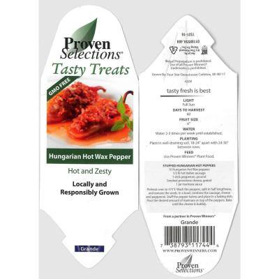 4.25 in. Grande Proven Selections Hungarian Hot Wax Pepper Live Plant Vegetable (Pack of 4)