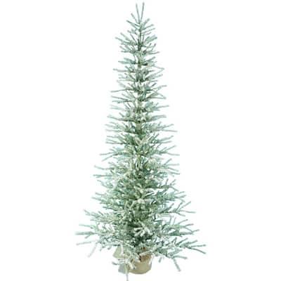 5 ft. Balled Snow Pine Tree 1553