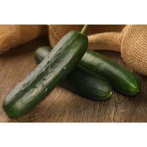 4.25 in. Grande Proven Selections Straight Eight (Cucumber) Live Vegetable Plant, 4-Pack