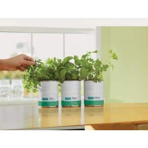 Basil/Cilantro/Mint Grow Kit Herb Garden (3-Pack)