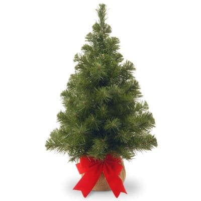 24 in. Noble Spruce Tree