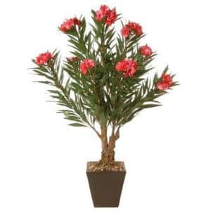 32 in. Oleandro Plant