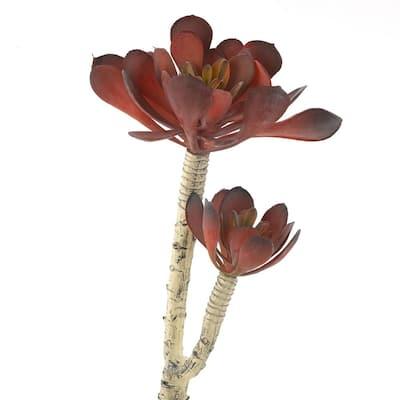 Indoor Frosty Red Pinwheel Echeveria (Set of 3)