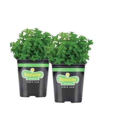 19.3 oz. Lemon Balm Plant 2-Pack