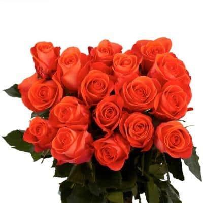 Fresh Coral Color Roses (250 Stems)