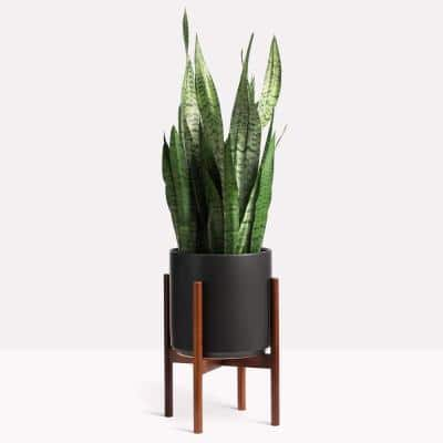 12 in. Black Ceramic Cylinder Planter with Medium Wood Stand (10 in., 12 in. or 15 in.)