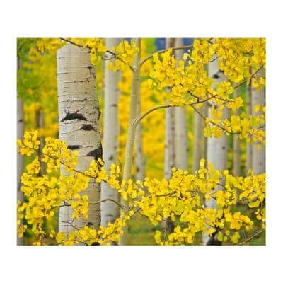 Aspen Trees Close Up by Colossal Images Canvas Wall Art 36 in. x 54 in.