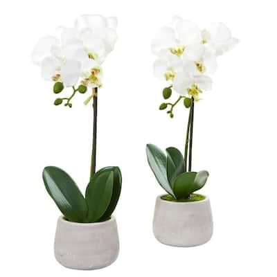 Indoor Phalaenopsis Orchid Artificial Arrangement (Set of 2)