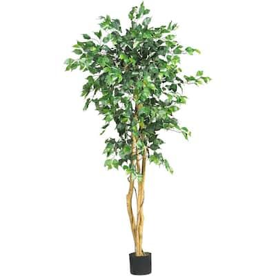 5 ft. High Indoor Ficus Tree