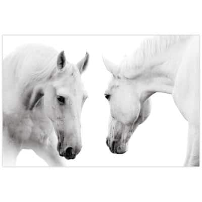 """""""White Horse"""" Unframed Free Floating Tempered Glass Panel Graphic Animal Wall Art Print 32 in. x 48 in."""
