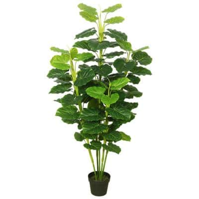 Fresh Philodendron Everyday Tree with Pot in Green