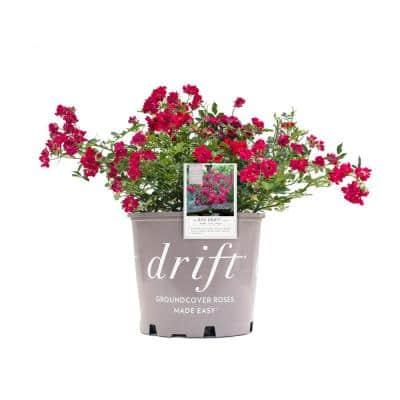 3 Gal. The Red Drift Rose Bush with Red Flowers (2-Plants)
