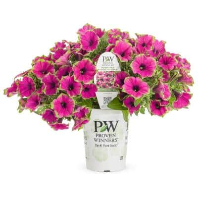 4.25 in. Proven Winners Grande Supertunia Picasso Live Petunia Plant with Purple & Green Flowers (4-Pack)