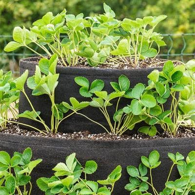 20 in. Dia Strawberry Tiered Patio Grow Tub Planter