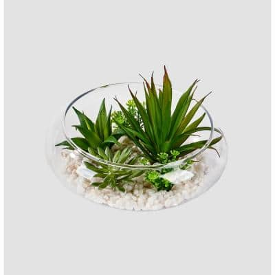 6 in. Mixed Succulents on Stones in Glass Pot
