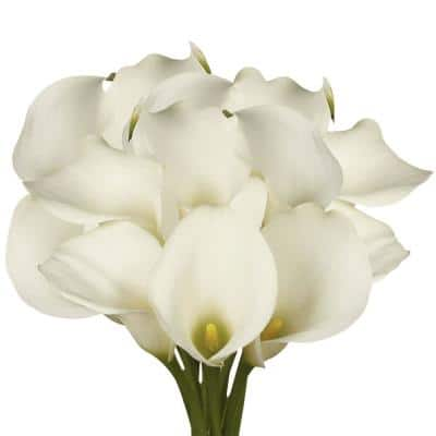 30 Stems of White Calla Lilies- Fresh Flower Delivery