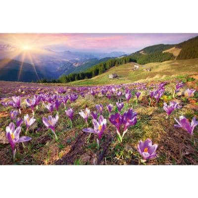 Photographic Crocuses at Spring Landscapes Wall Mural